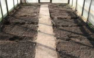 Замена земли в теплице