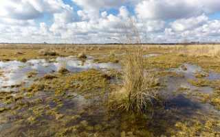 Понижаем уровень грунтовых вод